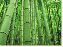 Building a Sustainable (bamboo) Future